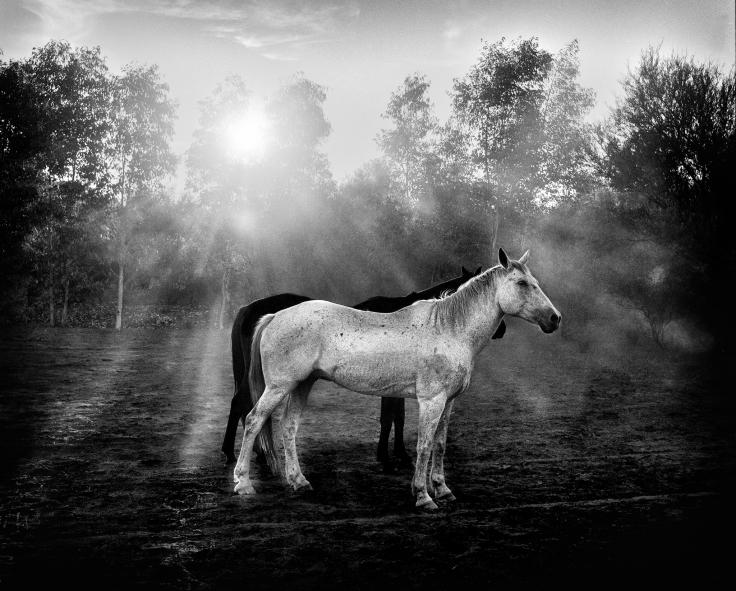 bw-horses
